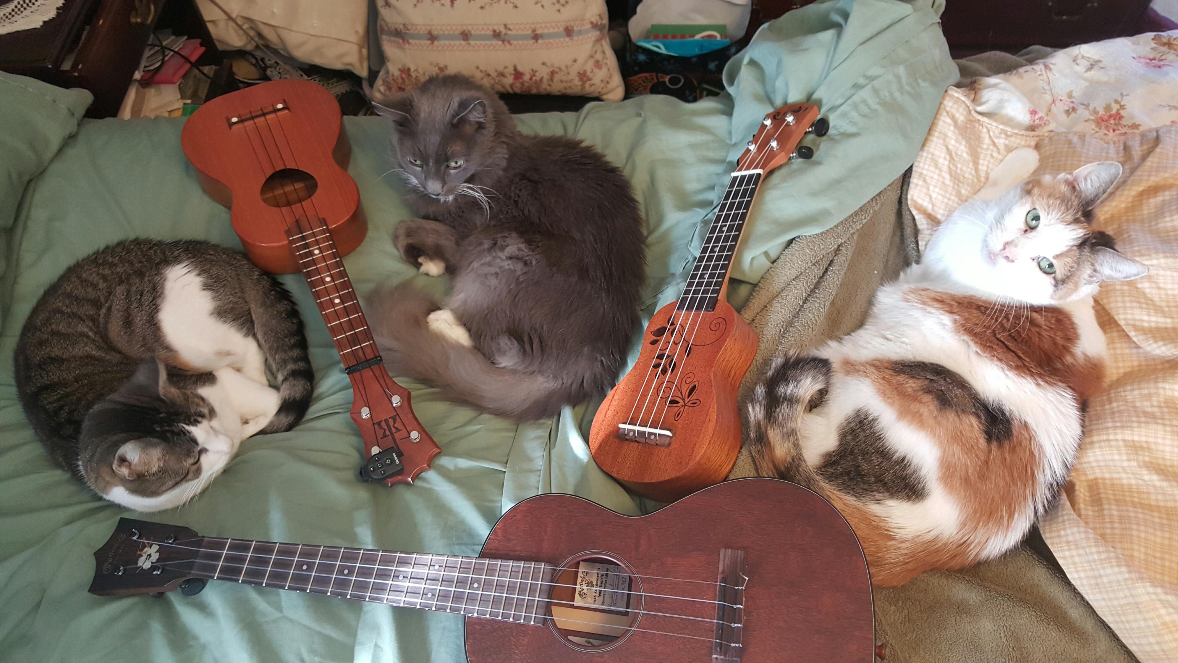 Cathy Frahme.One can never have too many ukes or cats. Well, ukes anyway. Muzby, Angel and Marshmallow with my Koaloha soprano,  Rubin pocket uke and my pride and joy,  Martin