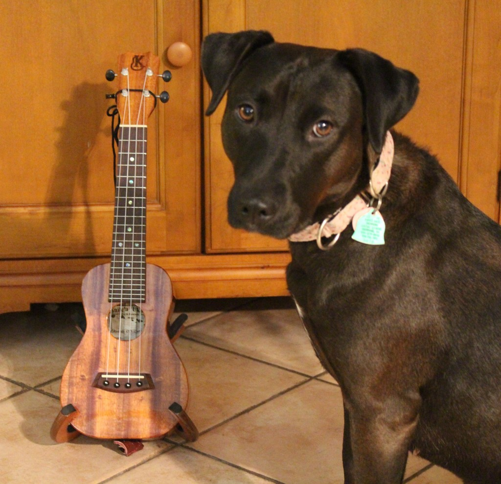 stories iggy david bowie wrote classic ukulele